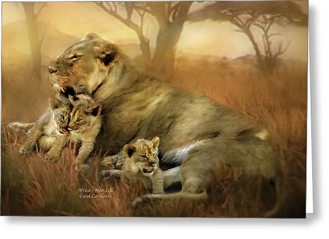 Serengeti Lioness Greeting Cards - New Life Greeting Card by Carol Cavalaris