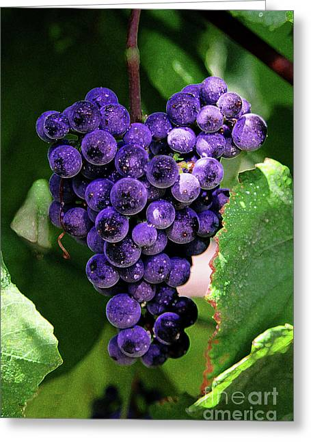 Purple Grapes Greeting Cards - New Wine Greeting Card by Constance Woods