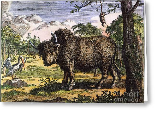 Hennepin Greeting Cards - New World: Buffalo, 1699 Greeting Card by Granger