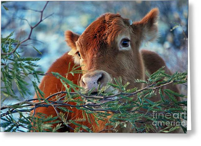 Best Sellers -  - Grazing Snow Greeting Cards - New Years Morning Cow Greeting Card by Donna Van Vlack