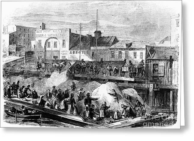 Beach Street Greeting Cards - New York: Garbage, 1866 Greeting Card by Granger