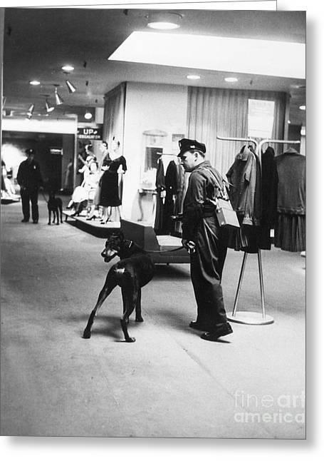 Guard Dog Greeting Cards - New York: Macys, 1955 Greeting Card by Granger