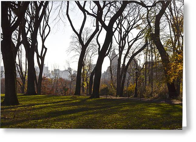 New York Trees Greeting Card by Snow  White