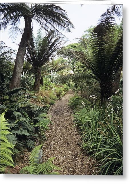 Walk Paths Greeting Cards - New Zealand Walk At Heligan Gardens Greeting Card by Adrian Thomas