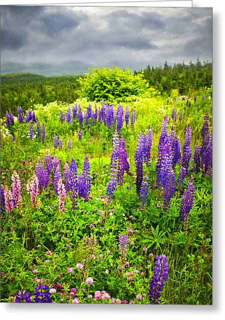 Flowering Greeting Cards - Newfoundland meadow Greeting Card by Elena Elisseeva