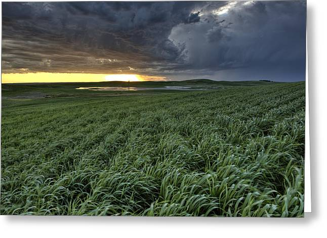 Beautiful Scenery Digital Art Greeting Cards - Newly planted crop Greeting Card by Mark Duffy