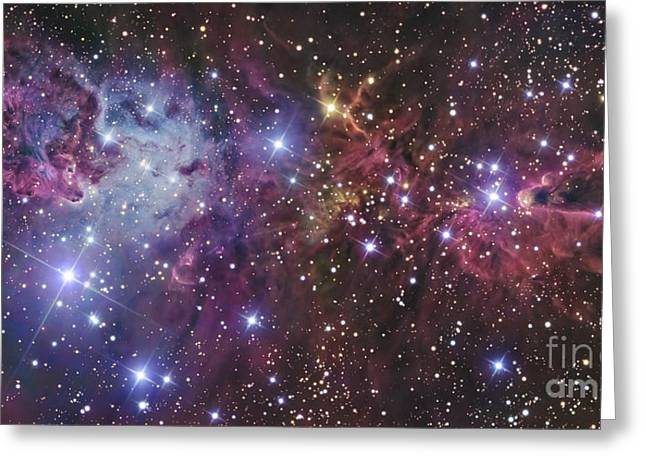Starfield Greeting Cards - Ngc 2264 Greeting Card by R Jay GaBany