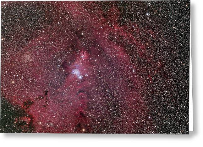 Monoceros Greeting Cards - Ngc 2264, The Cone And Christmas Tree Greeting Card by Phillip Jones