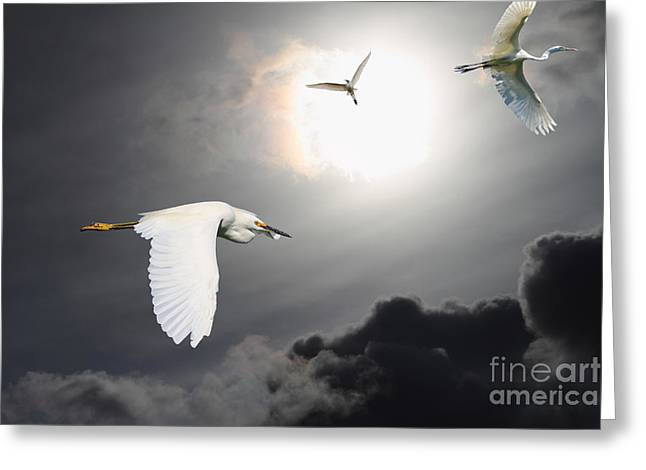 Night Of The White Egrets Greeting Card by Wingsdomain Art and Photography