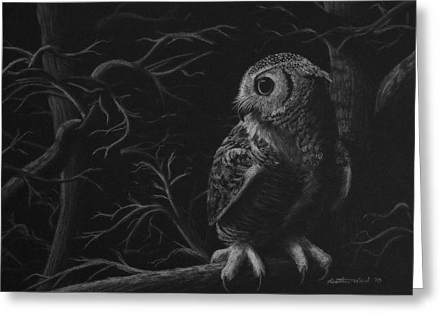 Raptor Drawings Greeting Cards - Night Owl Greeting Card by Heather Ward
