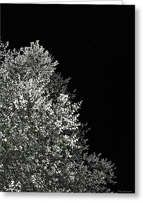 Kay Lovingood Greeting Cards - Night Tree Greeting Card by Kay Lovingood