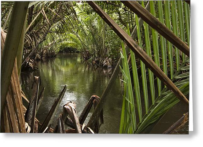 Nipa Palms Line A Channel Greeting Card by Tim Laman