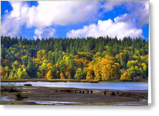 Watershed Greeting Cards - Nisqually Wildlife Refuge P24 Greeting Card by David Patterson