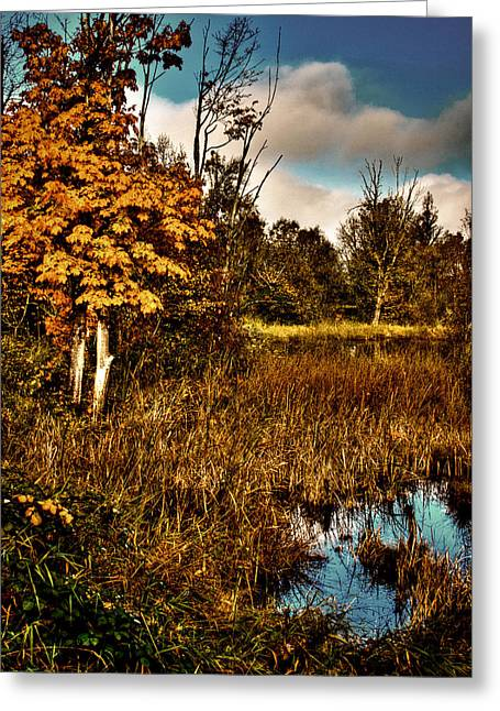 Wildlife Refuge. Greeting Cards - Nisqually Wildlife Refuge P40b Greeting Card by David Patterson