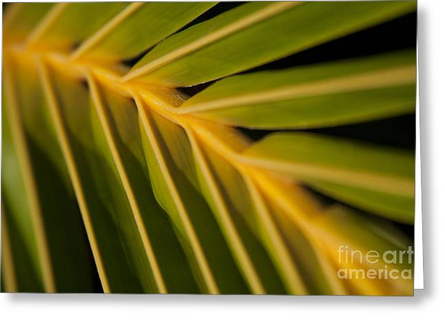 Niu Greeting Cards - Niu - Cocos nucifera - Hawaiian Coconut Palm Frond Greeting Card by Sharon Mau