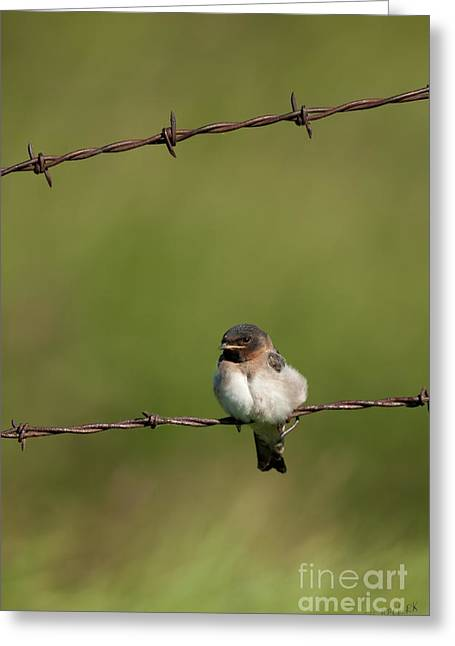Swallow Greeting Cards - No Boundries Greeting Card by Reflective Moments  Photography and Digital Art Images
