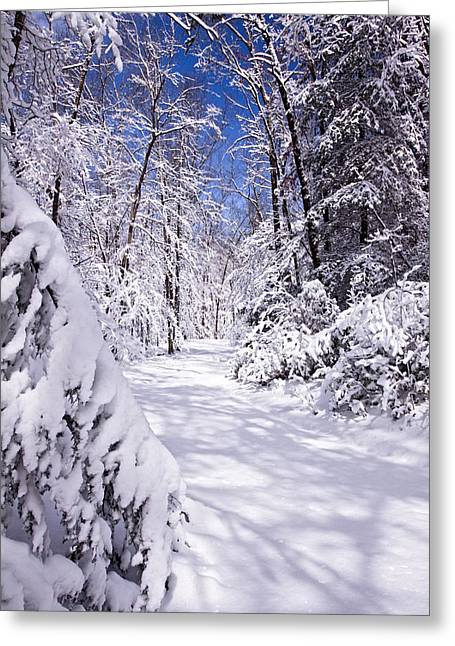 Forest Photographs Greeting Cards - No Footprints Greeting Card by Rob Travis