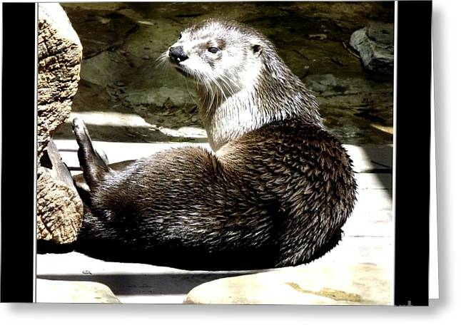 Hawk Creek Greeting Cards - North American River Otter Greeting Card by Rose Santuci-Sofranko