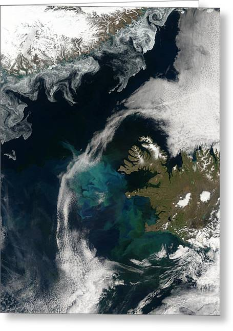 Phytoplankton Photographs Greeting Cards - North Atlantic Bloom Greeting Card by Science Source