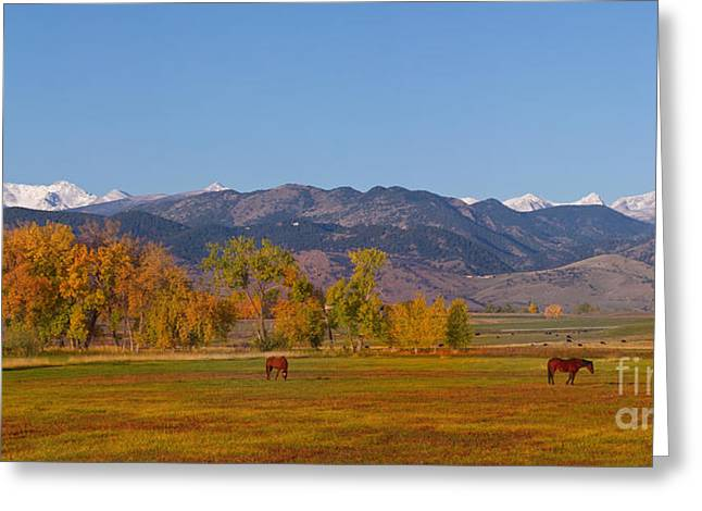 Grazing Snow Greeting Cards - North Boulder County Colorado Front Range Panorama With Horses Greeting Card by James BO  Insogna