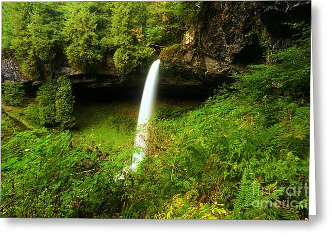 Silver Falls State Park Greeting Cards - North Falls Canyon Greeting Card by Adam Jewell