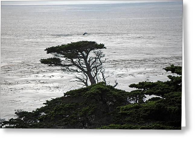 Point Lobos Greeting Cards - North Point Greeting Card by Harvey Barrison