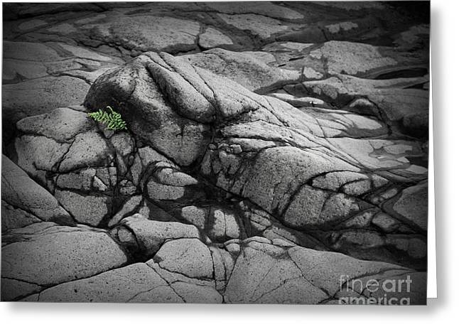 Minnesota Grown Photographs Greeting Cards - North Shore Fern Greeting Card by Perry Webster