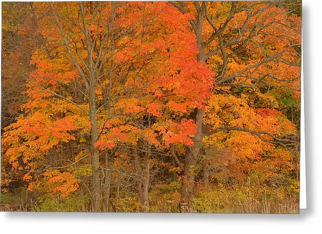 Northeast Fall Colors Greeting Card by Stephen  Vecchiotti