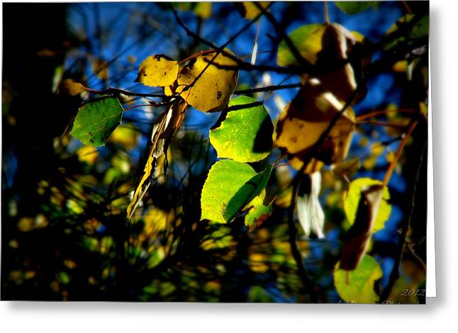Prescott Greeting Cards - Northern Arizona Autumn Colors Greeting Card by Aaron Burrows