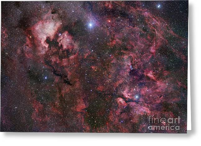 Interstellar Medium Greeting Cards - Northern Cygnus Greeting Card by Robert Gendler