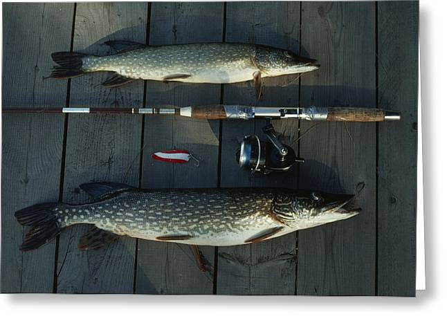 Northern Pike Greeting Cards - Northern Pike, A Spinning Rod And Lure Greeting Card by Gordon Wiltsie