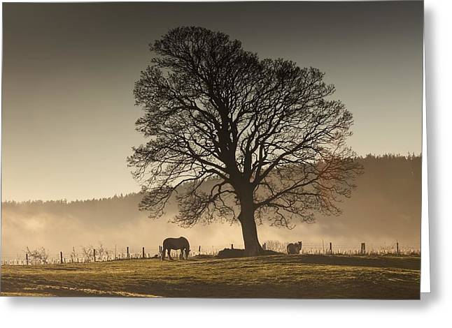 Foggy Day Greeting Cards - Northumberland, England Horses Grazing Greeting Card by John Short