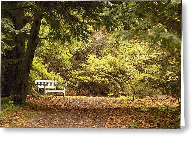 Wood Bench Greeting Cards - Northumberland, England Park Bench Greeting Card by John Short