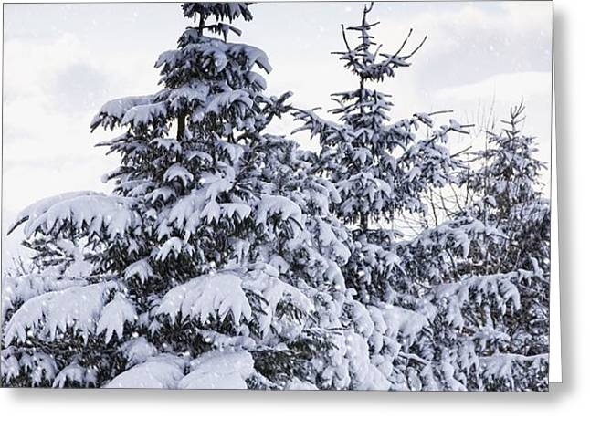 Northumberland, England Snow-covered Greeting Card by John Short