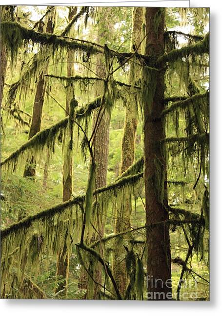 Moss Green Greeting Cards - Northwest Mossy Tree Greeting Card by Carol Groenen