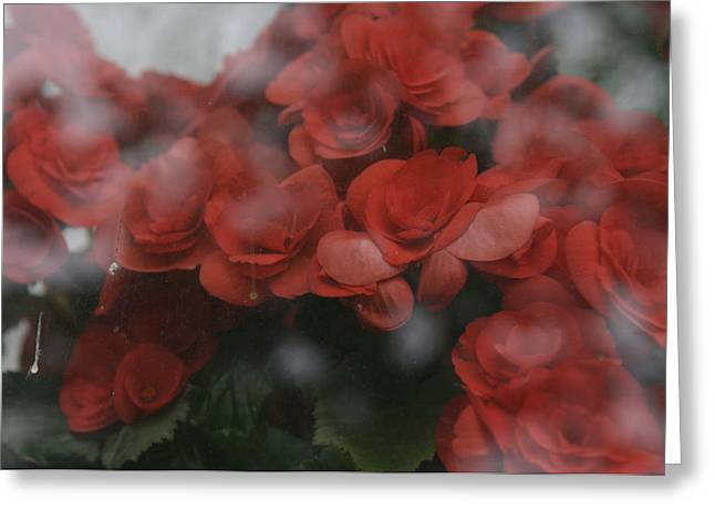 Window Of Life Greeting Cards - Norway, Red Flower On Window, Close-up Greeting Card by Keenpress