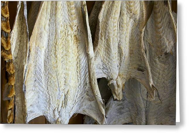 Drying Racks Greeting Cards - Norway, Reine, Fish Kept For Drying Greeting Card by Keenpress