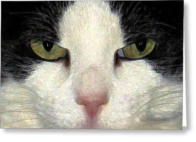 Photos Of Cats Digital Greeting Cards - Not Amused Greeting Card by Dale   Ford