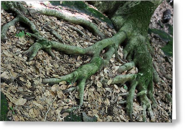 Tree Roots Digital Art Greeting Cards - Nourishment Greeting Card by Amanda Barcon