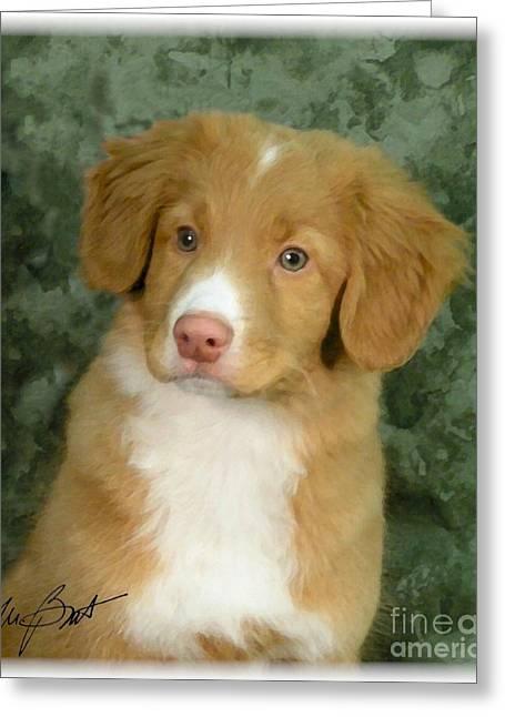Nova Scotia Duck Toller Pup Greeting Card by Maxine Bochnia