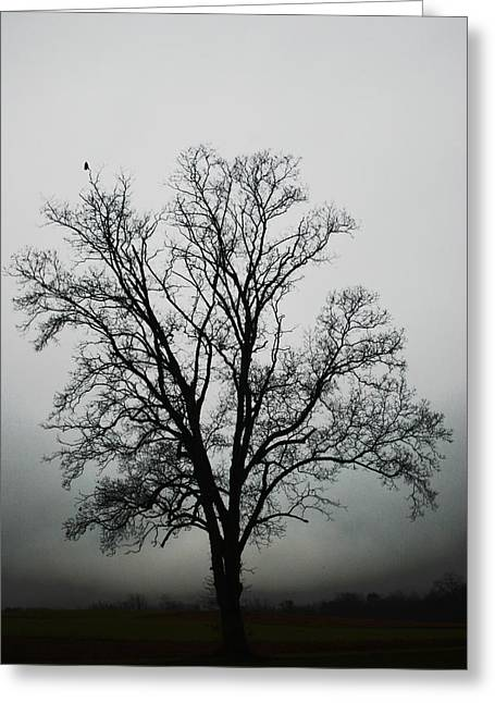 Crows In Trees Greeting Cards - November Tree In Fog Greeting Card by Patricia Motley