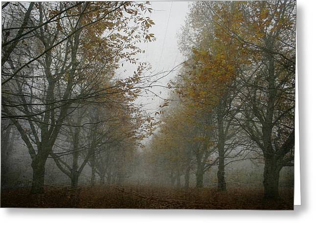 Fallen Leaf Greeting Cards - November wanderings Greeting Card by Nomad Art And  Design