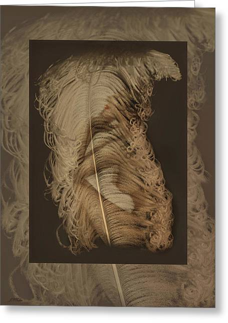 John Neville Cohen Greeting Cards - Nude and Feather Card Greeting Card by John Neville Cohen