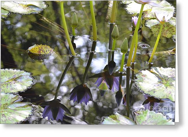Numinous Greeting Cards - Numinous Reflections Greeting Card by Maria Urso