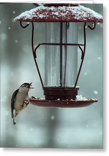 Snow Seeds Greeting Cards - Nuthatch Catch Greeting Card by Bill Tiepelman