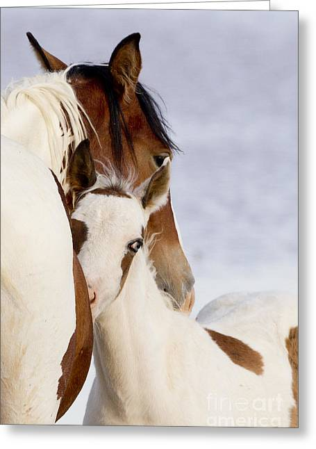Wild Horses Greeting Cards - Nuzzle Greeting Card by Carol Walker
