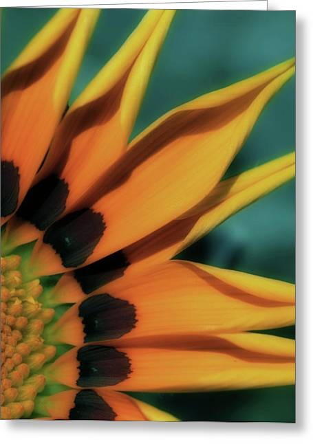 Pointed Petals Greeting Cards - O Happy Day Greeting Card by Bonnie Bruno