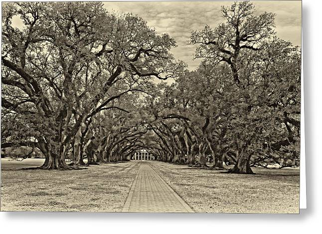 Slaves Greeting Cards - Oak Alley 3 antique sepia Greeting Card by Steve Harrington