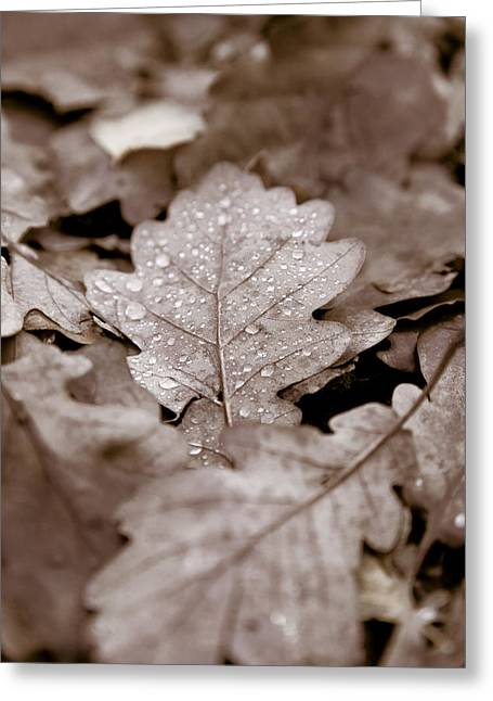 Dignity Greeting Cards - Oak Leaf Greeting Card by Frank Tschakert