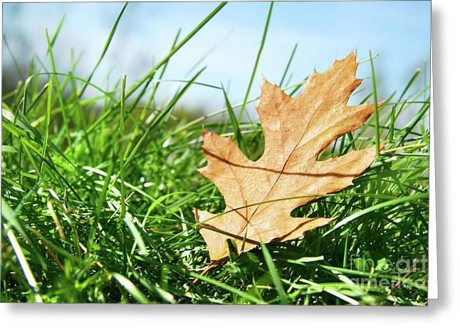 Green Grass Blue Sky Greeting Cards - Oak leaf in the grass Greeting Card by Sandra Cunningham